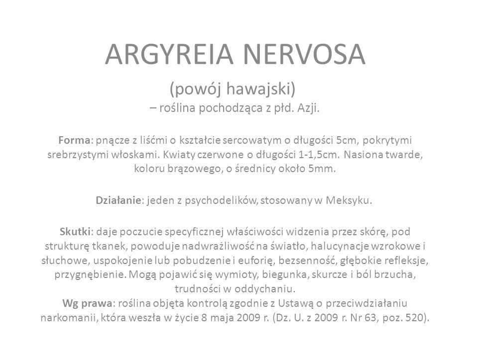 ARGYREIA NERVOSA (powój hawajski) – roślina pochodząca z płd. Azji.