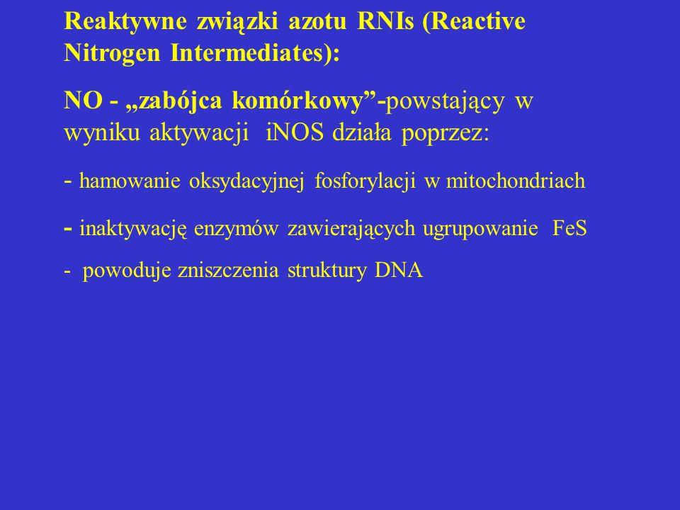 Reaktywne związki azotu RNIs (Reactive Nitrogen Intermediates):