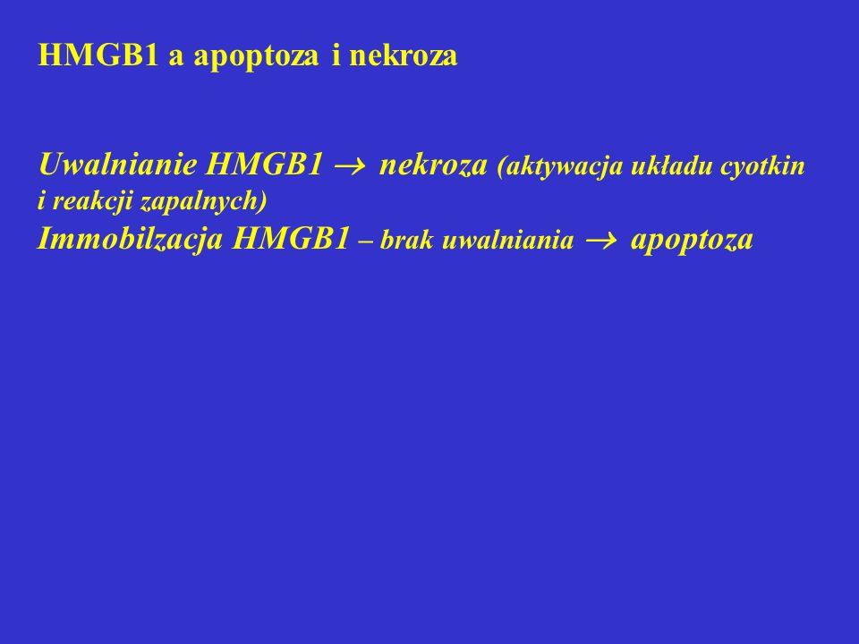 HMGB1 a apoptoza i nekroza