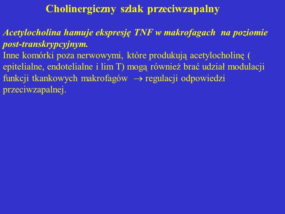 Cholinergiczny szlak przeciwzapalny