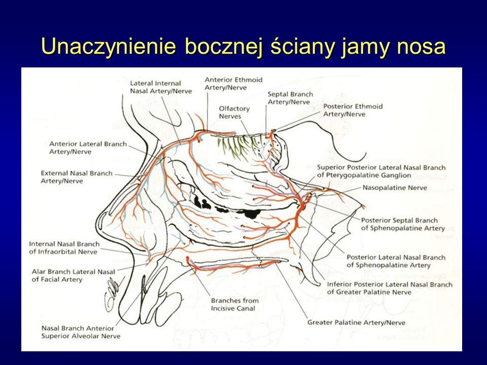 Unaczynienie bocznej ściany jamy nosa
