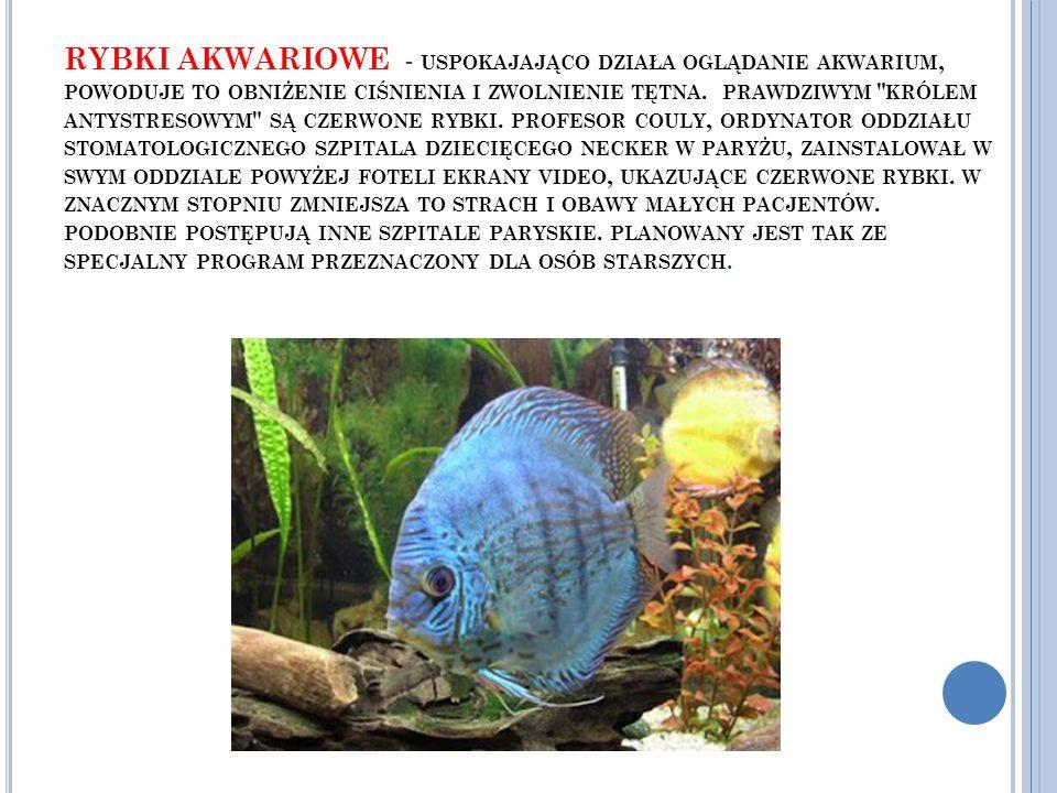 RYBKI AKWARIOWE - uspokajająco działa oglądanie akwarium, powoduje to obniżenie ciśnienia i zwolnienie tętna.
