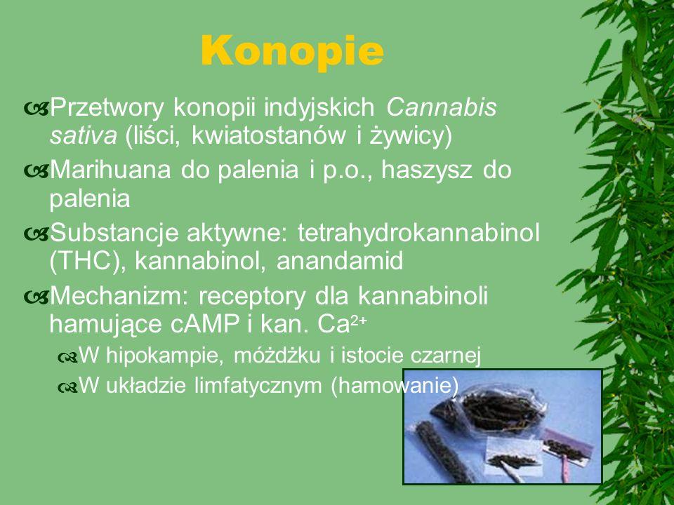 Konopie Przetwory konopii indyjskich Cannabis sativa (liści, kwiatostanów i żywicy) Marihuana do palenia i p.o., haszysz do palenia.