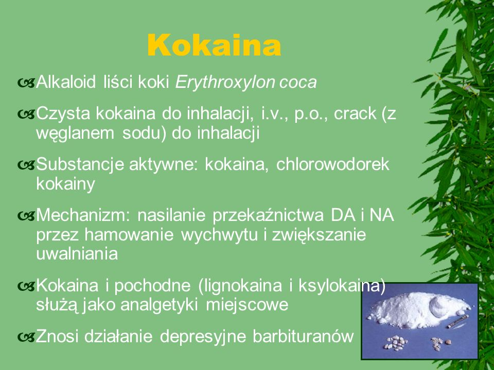 Kokaina Alkaloid liści koki Erythroxylon coca