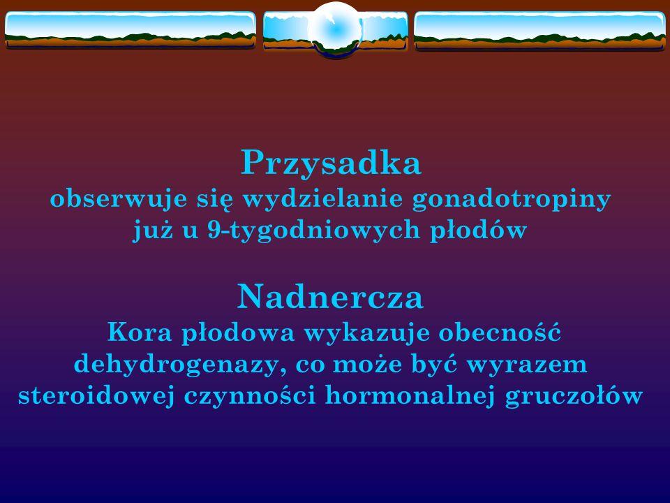 Przysadka obserwuje się wydzielanie gonadotropiny już u 9-tygodniowych płodów Nadnercza Kora płodowa wykazuje obecność dehydrogenazy, co może być wyrazem steroidowej czynności hormonalnej gruczołów