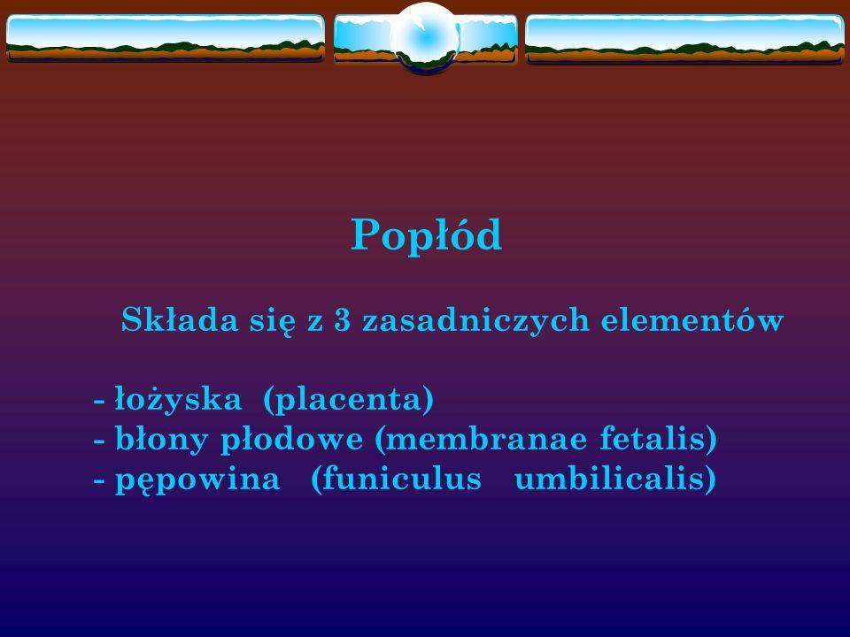 Popłód Składa się z 3 zasadniczych elementów - łożyska (placenta) - błony płodowe (membranae fetalis) - pępowina (funiculus umbilicalis)