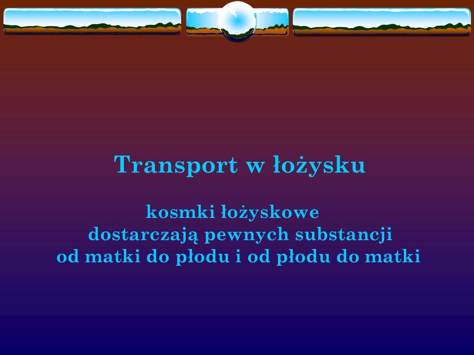 Transport w łożysku. kosmki łożyskowe