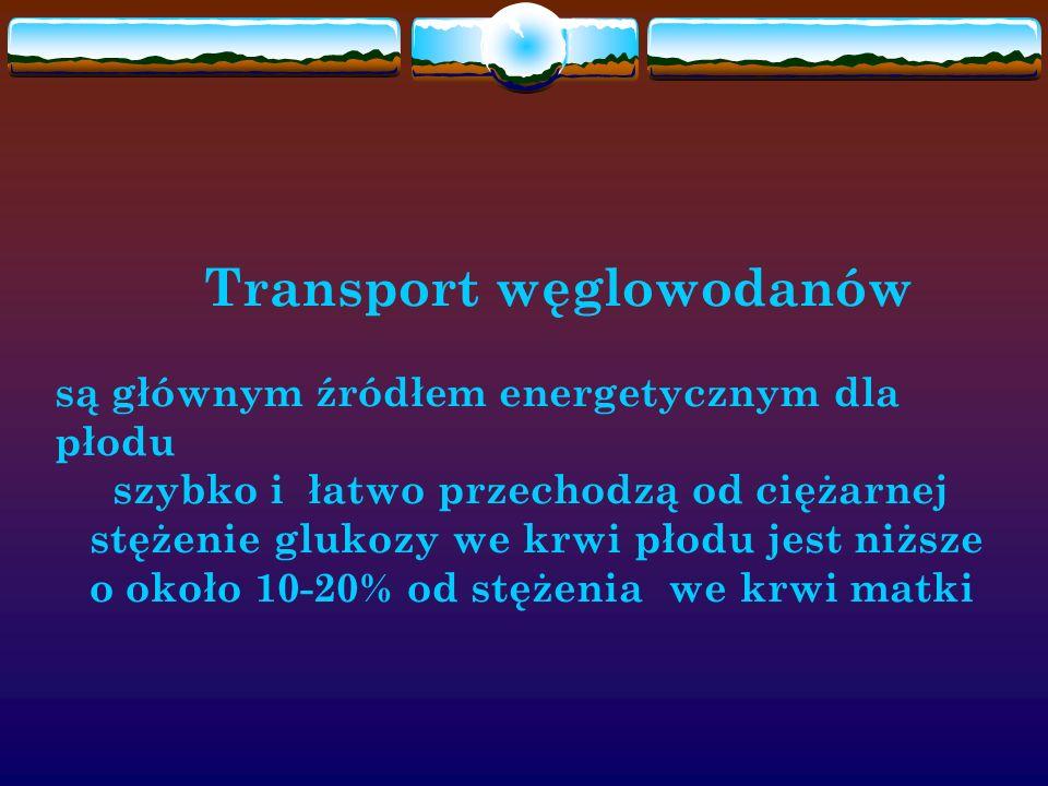 Transport węglowodanów
