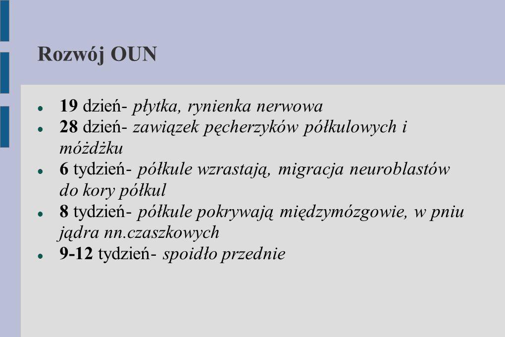 Rozwój OUN 19 dzień- płytka, rynienka nerwowa