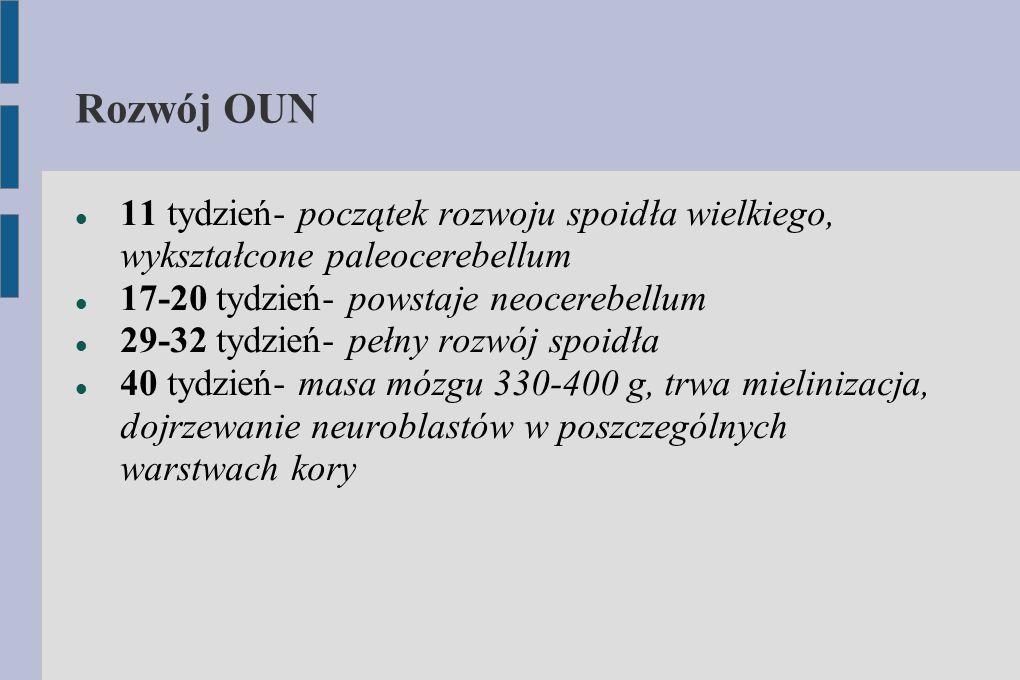 Rozwój OUN 11 tydzień- początek rozwoju spoidła wielkiego, wykształcone paleocerebellum. 17-20 tydzień- powstaje neocerebellum.