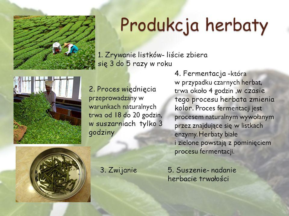 Produkcja herbaty 1. Zrywanie listków- liście zbiera się 3 do 5 razy w roku.