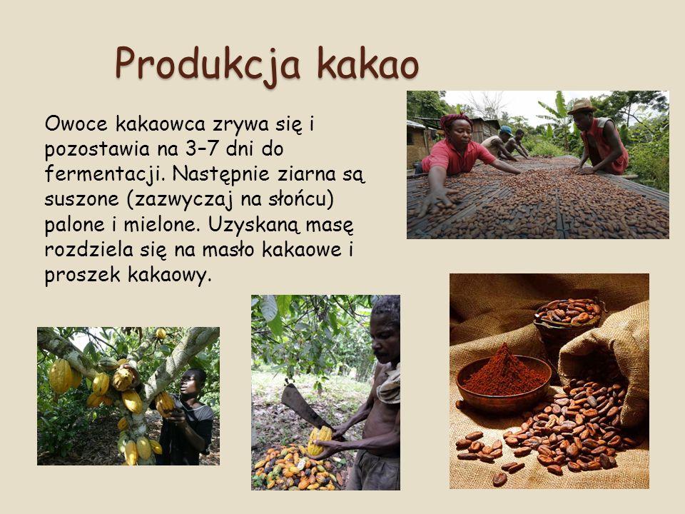 Produkcja kakao