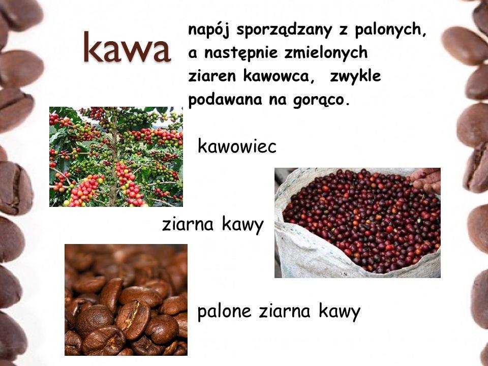 kawa kawowiec ziarna kawy palone ziarna kawy