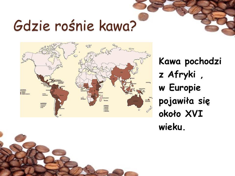Gdzie rośnie kawa Kawa pochodzi z Afryki , w Europie pojawiła się około XVI wieku.
