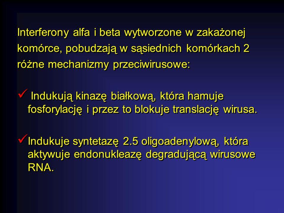 Interferony alfa i beta wytworzone w zakażonej