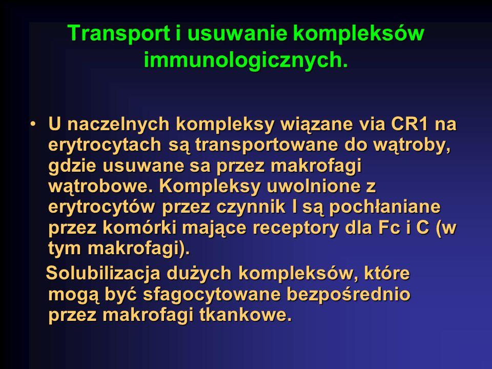 Transport i usuwanie kompleksów immunologicznych.