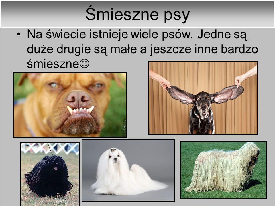 Śmieszne psy Na świecie istnieje wiele psów.