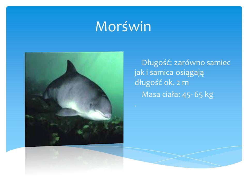 Morświn Długość: zarówno samiec jak i samica osiągają długość ok. 2 m