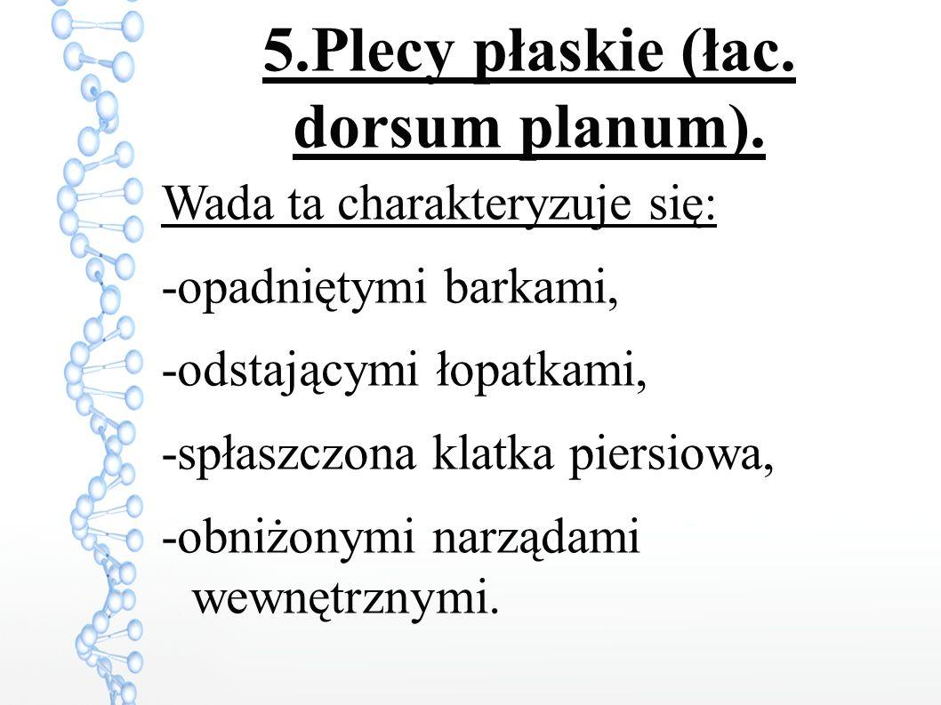 5.Plecy płaskie (łac. dorsum planum).