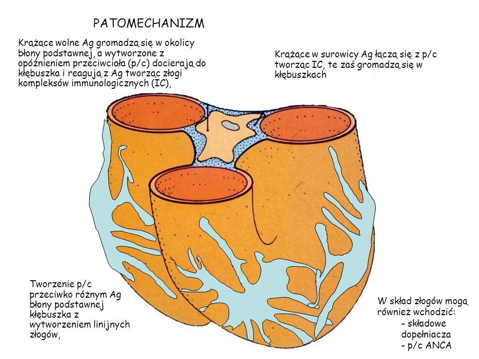 PATOMECHANIZM