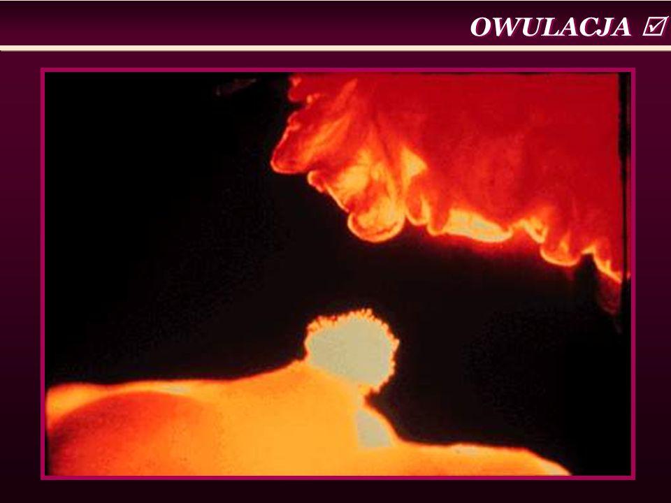 OWULACJA 