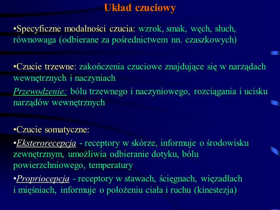 Układ czuciowy Specyficzne modalności czucia: wzrok, smak, węch, słuch, równowaga (odbierane za pośrednictwem nn. czaszkowych)