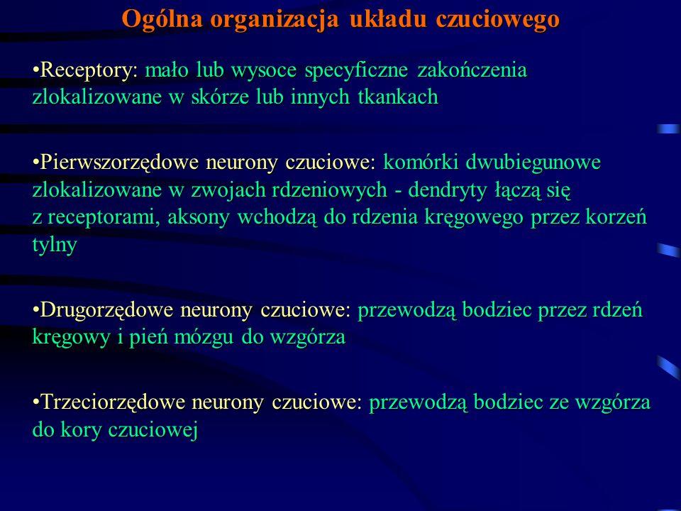 Ogólna organizacja układu czuciowego