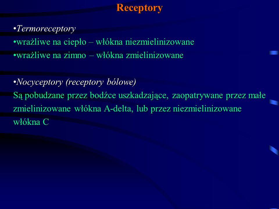 Receptory Termoreceptory wrażliwe na ciepło – włókna niezmielinizowane