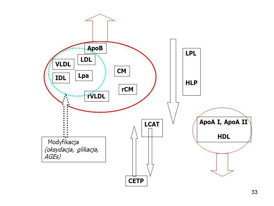 ApoB LPL. HLP. LDL. VLDL. CM. Lpa. IDL. rCM. rVLDL. ApoA I, ApoA II. HDL. LCAT. Modyfikacja.