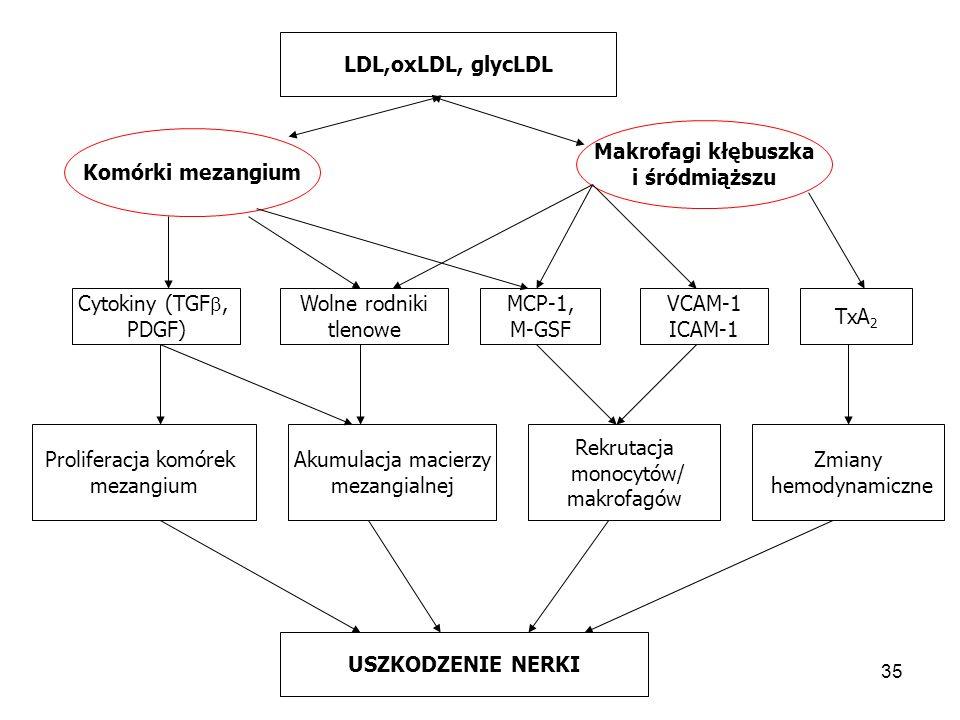 LDL,oxLDL, glycLDL Makrofagi kłębuszka. i śródmiąższu. Komórki mezangium. Cytokiny (TGF, PDGF)