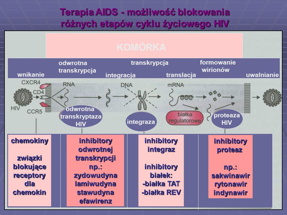 Terapia AIDS - możliwość blokowania różnych etapów cyklu życiowego HIV