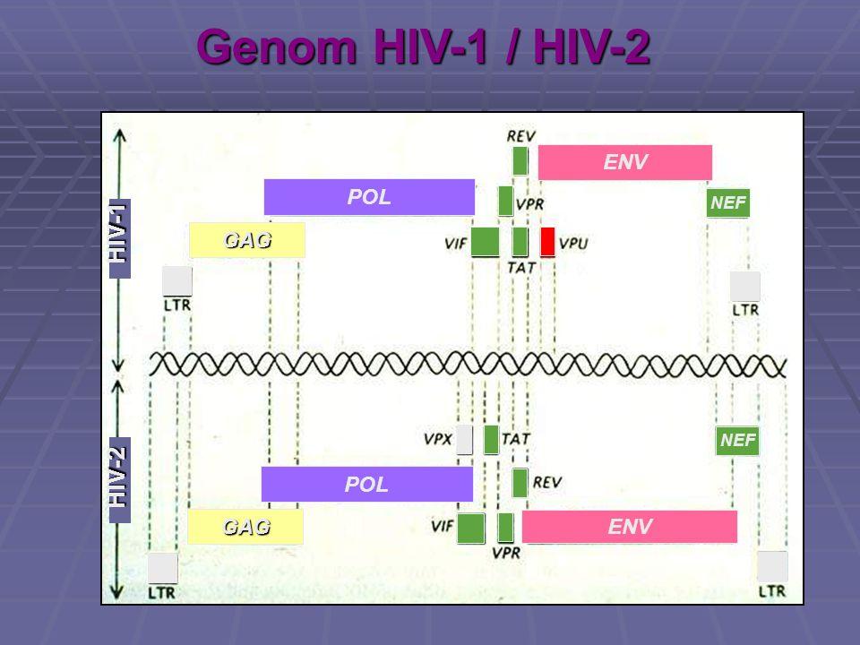 Genom HIV-1 / HIV-2 GAG POL ENV HIV-1 HIV-2 NEF