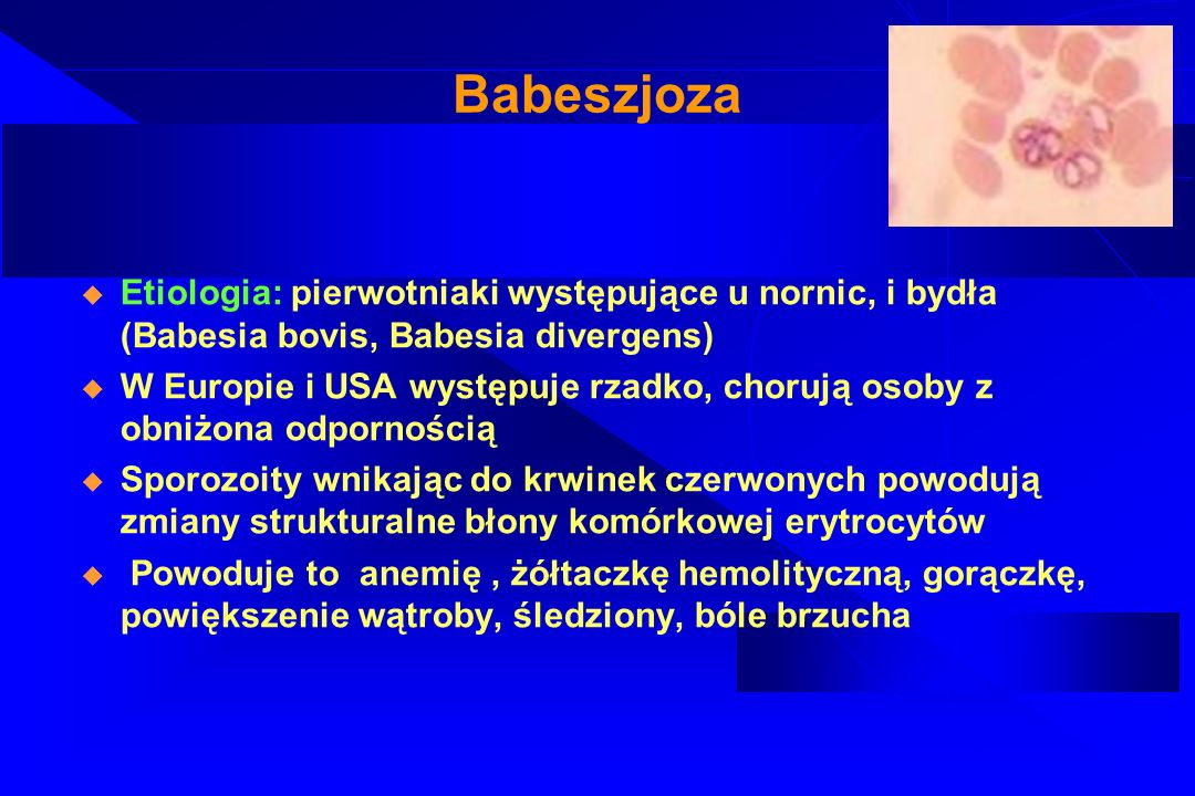 BabeszjozaEtiologia: pierwotniaki występujące u nornic, i bydła (Babesia bovis, Babesia divergens)