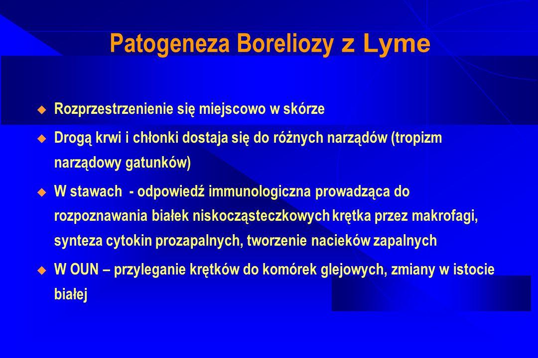 Patogeneza Boreliozy z Lyme