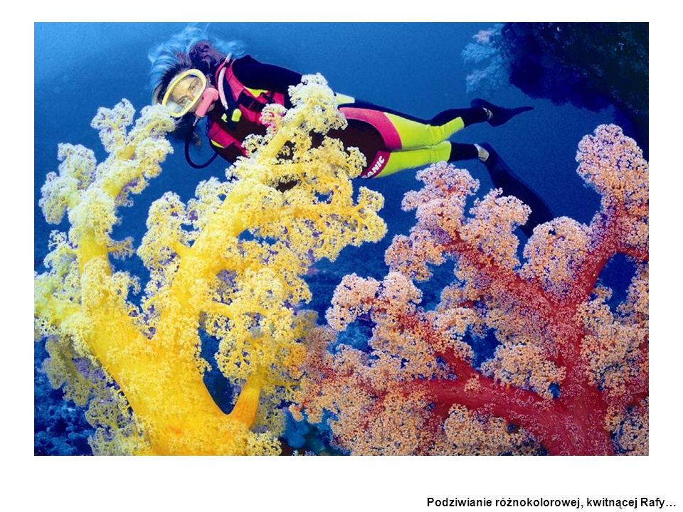 spectacular plummeting walls to - huge soft coral trees. 1000m (3300ft)