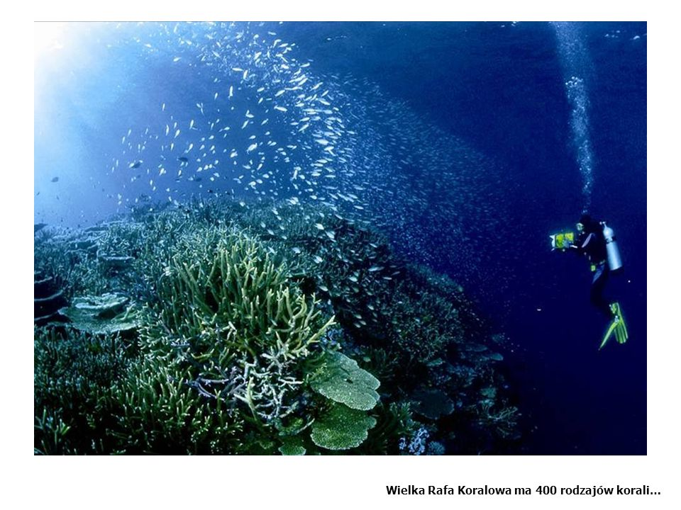 The Great Barrier Reef has 400 species or coral and 1500 species of fish ranging from ….pto