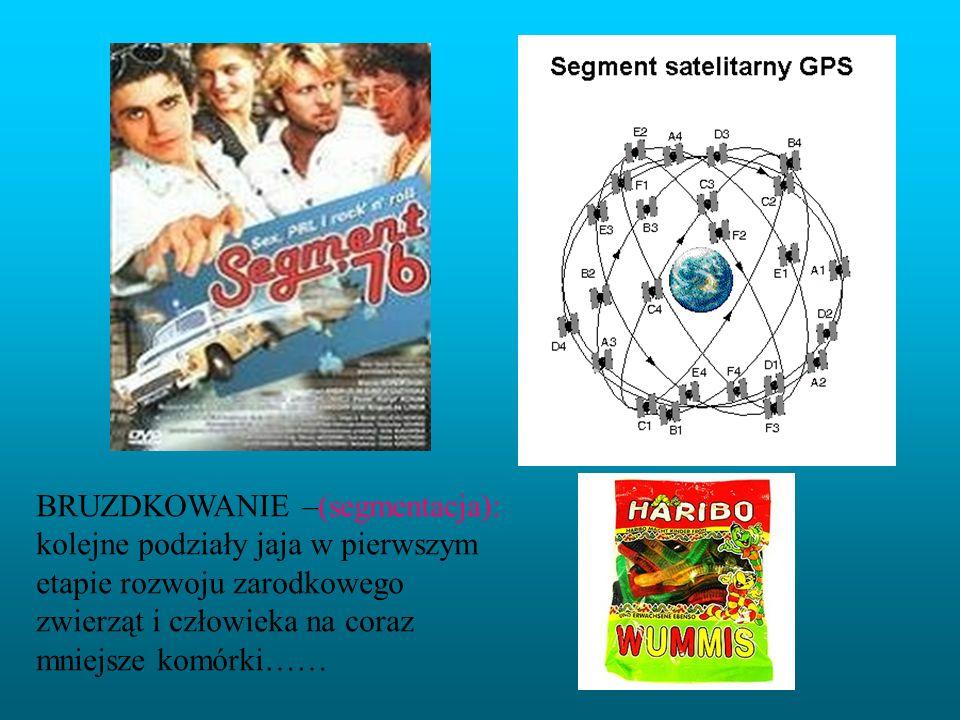 BRUZDKOWANIE –(segmentacja): kolejne podziały jaja w pierwszym etapie rozwoju zarodkowego zwierząt i człowieka na coraz mniejsze komórki……