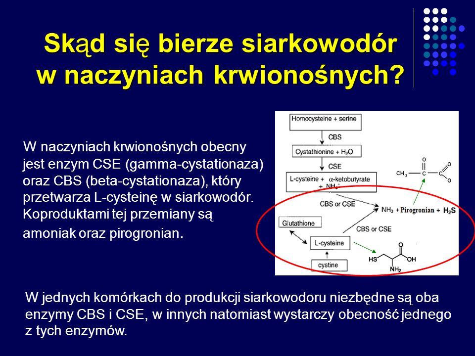 Skąd się bierze siarkowodór w naczyniach krwionośnych