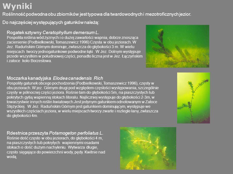 Wyniki Roślinność podwodna obu zbiorników jest typowa dla twardowodnych i mezotroficznych jezior. Do najczęściej występujących gatunków należą: