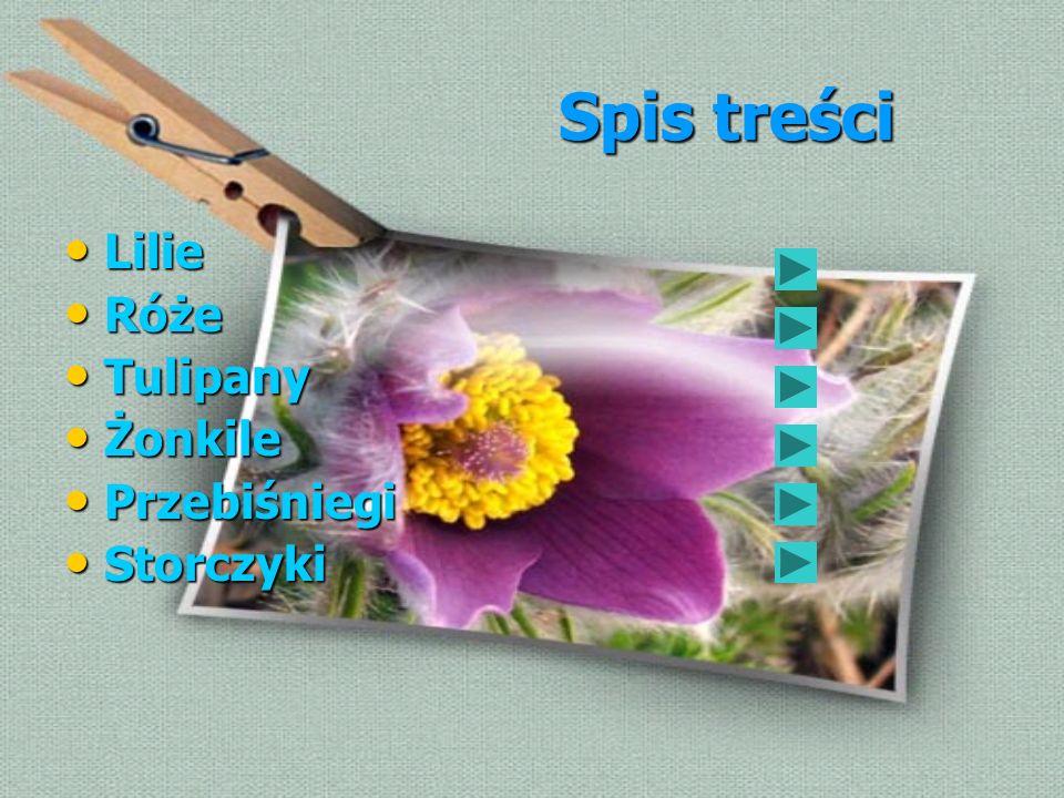 Spis treści Lilie Róże Tulipany Żonkile Przebiśniegi Storczyki