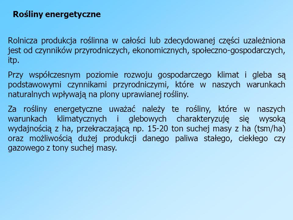 Rośliny energetyczne
