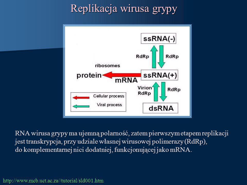 Replikacja wirusa grypy