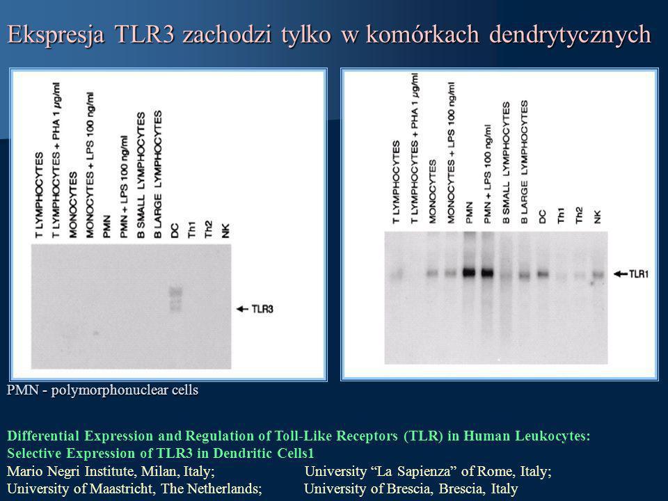 Ekspresja TLR3 zachodzi tylko w komórkach dendrytycznych