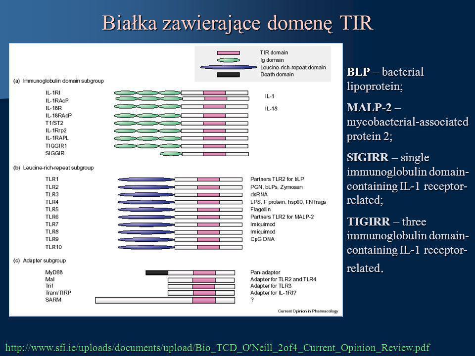Białka zawierające domenę TIR