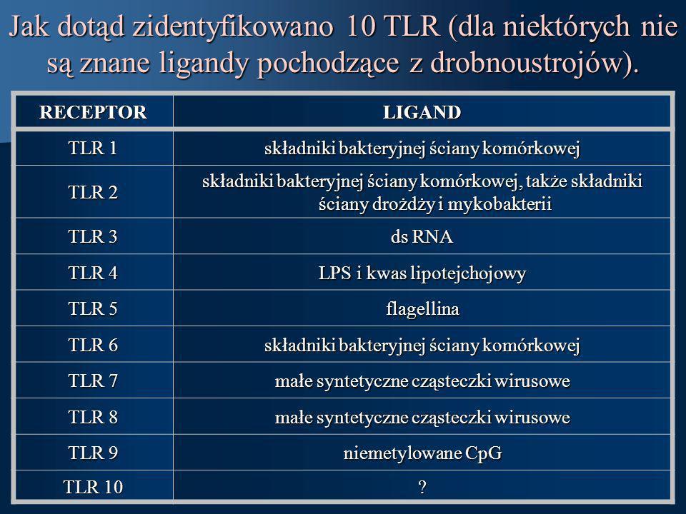Jak dotąd zidentyfikowano 10 TLR (dla niektórych nie są znane ligandy pochodzące z drobnoustrojów).