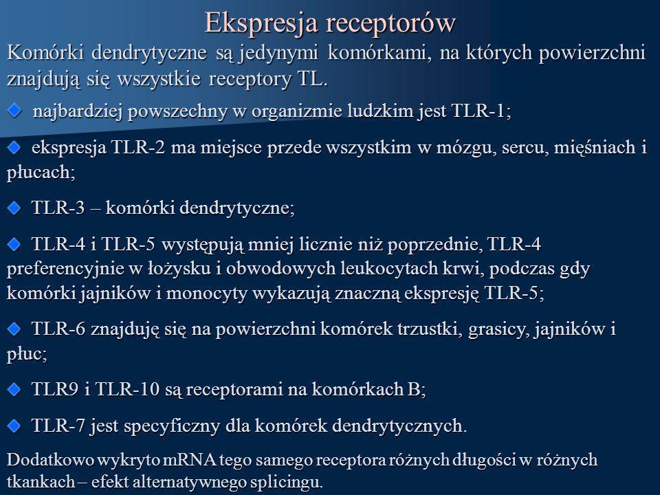 Ekspresja receptorów Komórki dendrytyczne są jedynymi komórkami, na których powierzchni znajdują się wszystkie receptory TL.