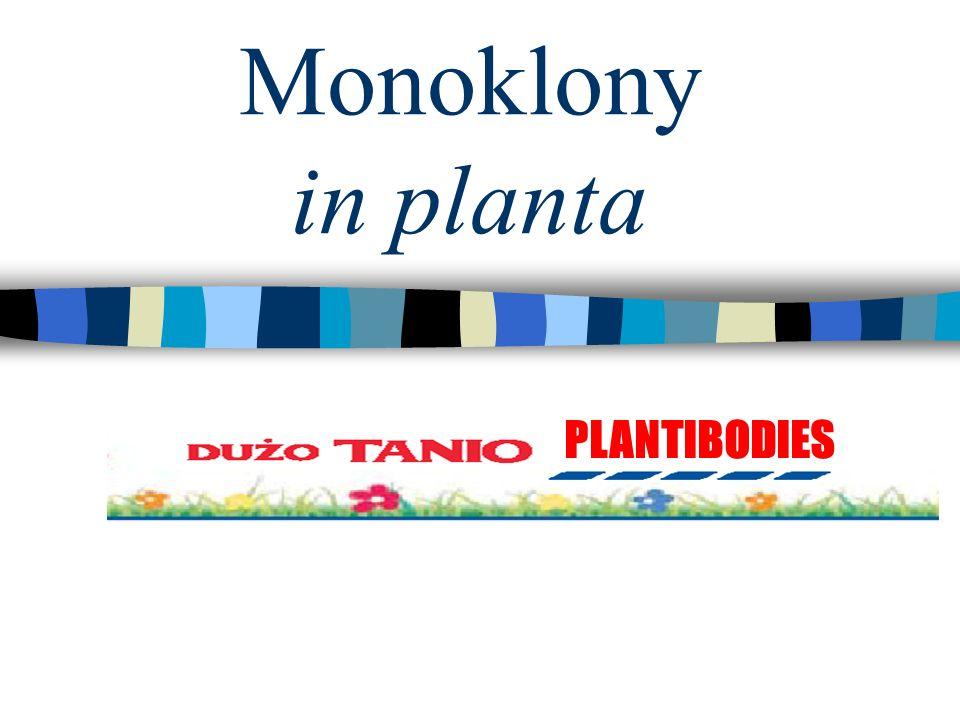 Monoklony in planta PLANTIBODIES