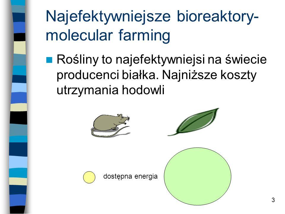Najefektywniejsze bioreaktory- molecular farming