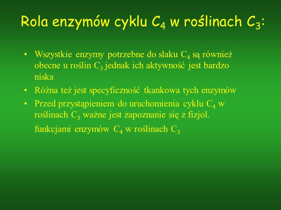Rola enzymów cyklu C4 w roślinach C3: