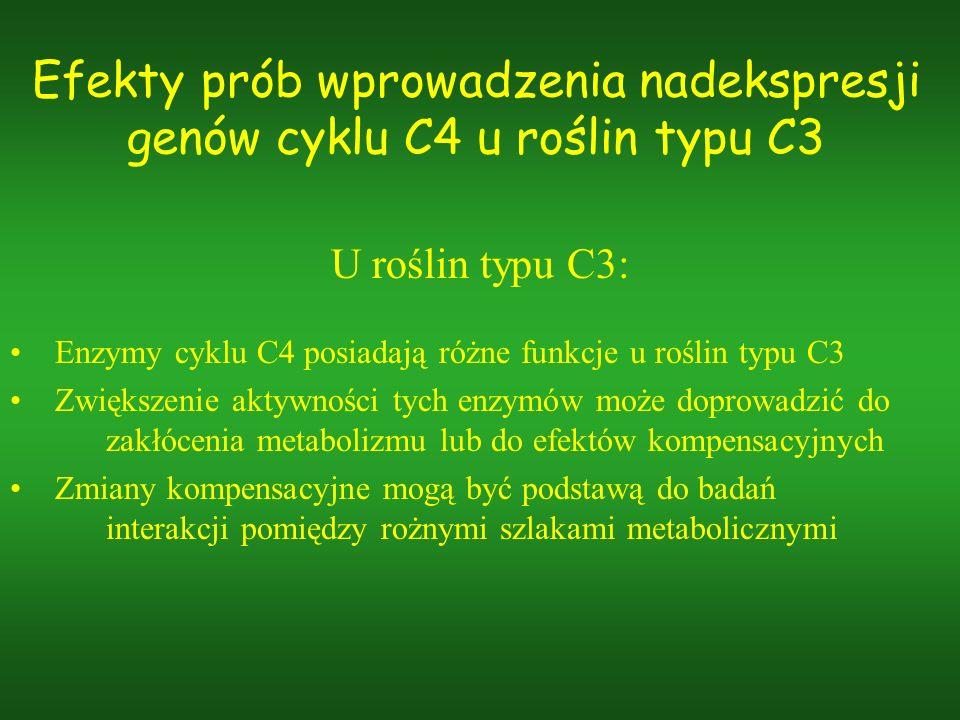 Efekty prób wprowadzenia nadekspresji genów cyklu C4 u roślin typu C3